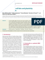 Smooth Muscle Cell Fate and Plasticity in Atherosclerosis