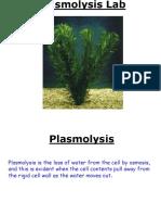 Plasmolysis lab.ppt