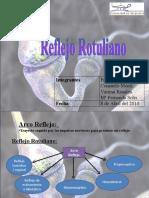 Reflejo rotuliano 2