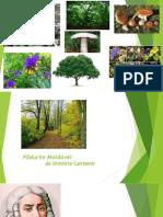 pădurile Moldovei