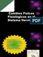 Cambios Físicos Fisiológicos en El Sistema Nervioso2015
