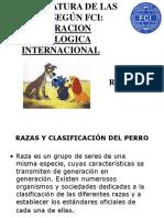 razas caninas 2019 2.pptx