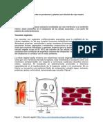 Capitulo 5 Vacuolas en Protozoos y Vegetales Con Tinción de Rojo Neutro