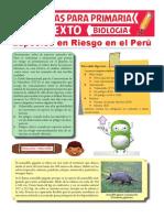 Especies en Riesgo en Perú Para Sexto de Primaria