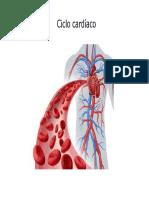 Clase 09 Ciclo Cardíaco y Presion