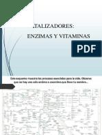 Enzimas_y_vitaminas y Acidos Nucleicos Final (1)