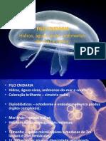 anotação1  de aula.pdf