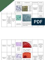 Staphylococcus de interés medico