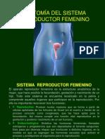 Tema 9- Anatomia Del Sistema Reproductivo Femenino