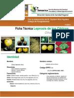 Leprosis de Los Citricos 2011(1)