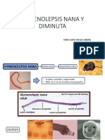 Hymenolepsis Nana y Diminuta