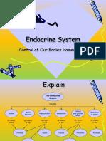 Endocrine System Feedback Systems