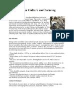 Oyster Aquabusiness