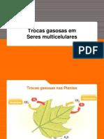 Trocas gasosas em seres multic._ed3a9115942823a9bdc9845688cf73ac.pdf