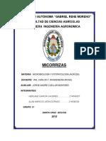 Micorriza Grupo b1