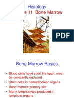 Lecture 11 Bone Marrow