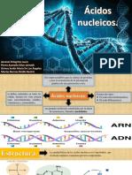 acidos nucleico