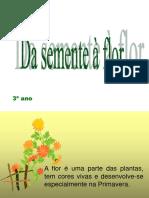 da semente a flor