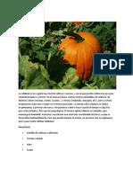 Cómo Cultivar Pimentón Desde Casa