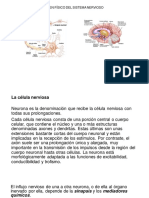 sistema nerviosoo