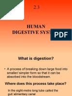 2.3 Digestive