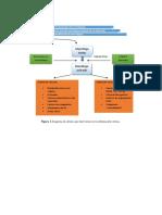 Macrófago - inflamación crónica