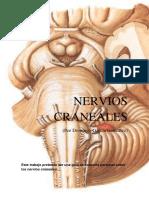 274575045-Pares-Craneales-Para-Craneo-Sacral.docx