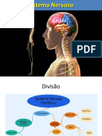 Aula Sistema Nervoso Periferico