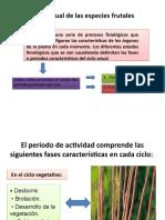 ciclo de especies frutales
