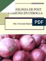 Post-cosecha de La Cebolla 1