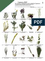 928_peru_plantas_medicinales_de_cajamarca.pdf