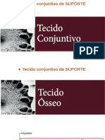 Histologia do Tecido Ósseo