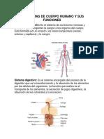 11 Sistemas de Cuerpo Humano y Sus Funciones