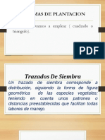 DENSIDAD DE SIEMBRA.pptx