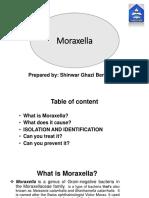 moraxela catarhalis