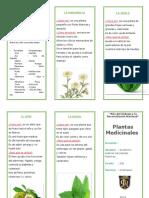 triptico plantas medicinales