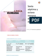 Clase Sobre Sexta s Ptima y Octava Semana Pf