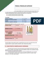 Premolarul Superior (1)
