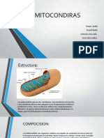 mitrocondrias (text).pptx
