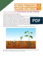 Germinación-y-Crecimiento-de-las-Plantas-para-Segundo-de-Primaria.pdf