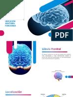 LÓBULO FRONTAL Diapositivas