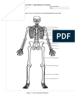 Activity 7. The Skeletal System.docx