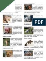 Animales Raros y en Extincion