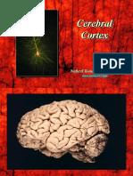 Cerebral Cortex (2)