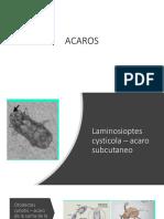 Reconocimiento de Parasitos (Acaros, Miasis, Artropodos)