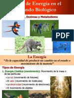 Energia, Enzimas y Metabolismo-1