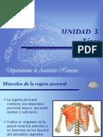 12-13 Tórax. Músculos de La Región Pectoral