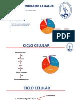 Ciclo Celular Gab 1