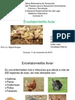 Diapositivas Aves