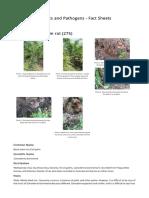 Oil Palm Basal Stem Rot 275